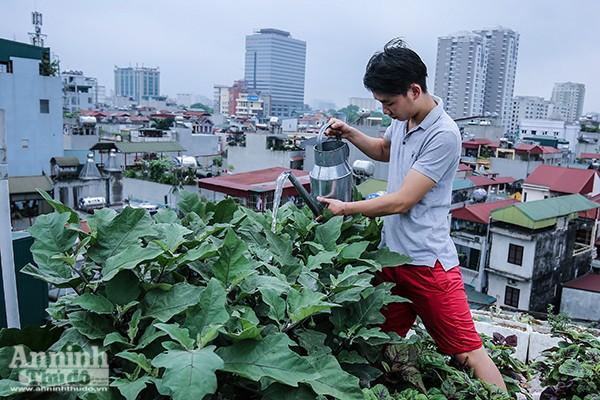 Những loại rau, quả ưa nắng được ưu tiên trồng trên sân thượng