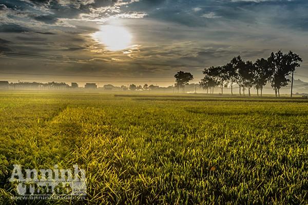 Những cánh đồng tuyệt đẹp của Hà Nội trong ngày mùa bội thu ảnh 8