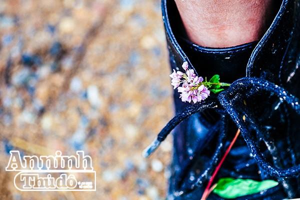 Cồn cào nỗi nhớ mang tên hoa tam giác mạch... ảnh 7