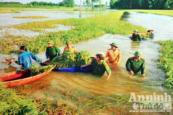 Cán bộ chiến sỹ Công an tỉnh Vĩnh Phúc giúp dân gặt lúa khắc phục hậu quả mưa lũ