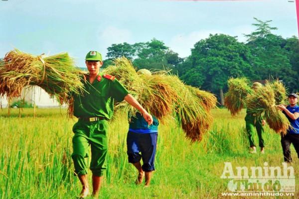 Công an Hà Tĩnh giúp dân gặt lúa