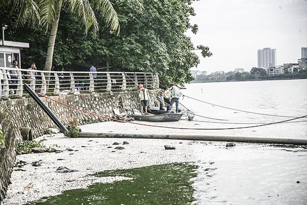 Sở Xây dựng Hà Nội cho biết ở hồ Tây có 25 tấn cá bị chết, bằng 1/10 năm 2016