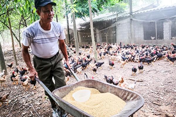 """Chuyện ông """"Lợi còi"""" 10 năm góp sức xây dựng nông thôn mới ở làng cổ Đường Lâm ảnh 1"""