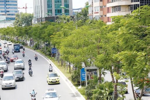 Cây xanh được trồng mới ở Hà Nội làm đẹp cảnh quan, mỹ quan đô thị