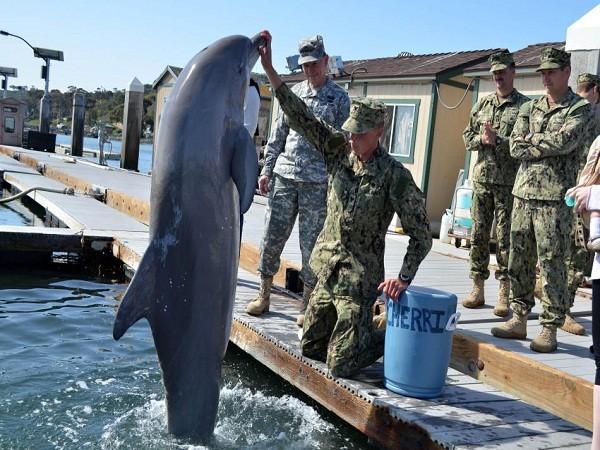 """Khám phá """"lực lượng đặc nhiệm cá heo, sư tử biển"""" của quân đội Mỹ ảnh 1"""