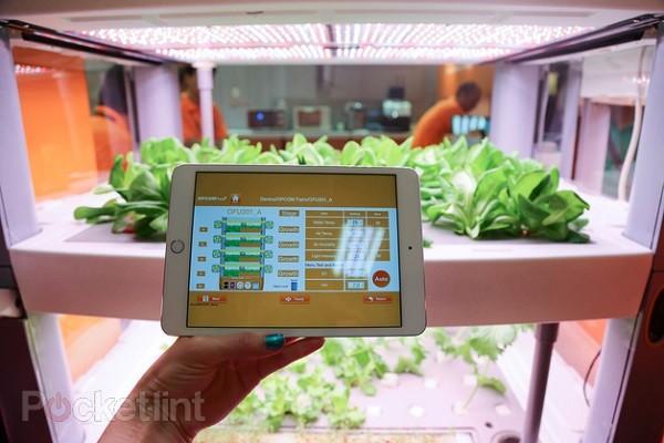 Trồng rau thật bằng iPad ảnh 6