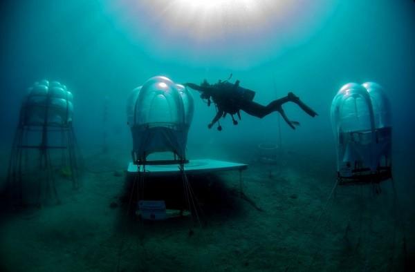 Trồng rau củ dưới đáy biển, tại sao không?