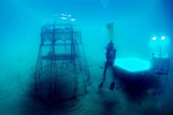 Trồng rau củ dưới đáy biển, tại sao không? ảnh 3