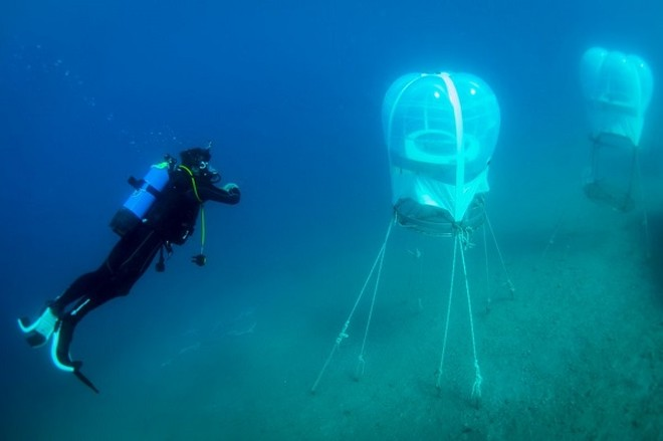 Trồng rau củ dưới đáy biển, tại sao không? ảnh 2