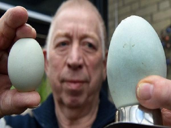 Quả trứng gà của gia đình ông Main to gấp 4 lần quả trứng bình thường