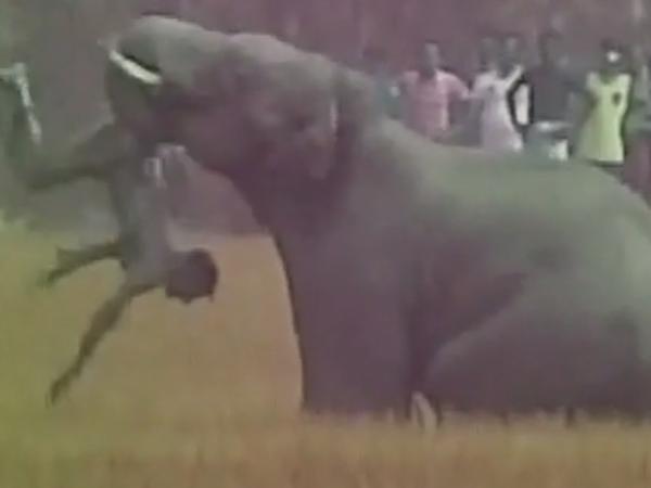 Con voi quăng quật một người đàn ông đến chết.