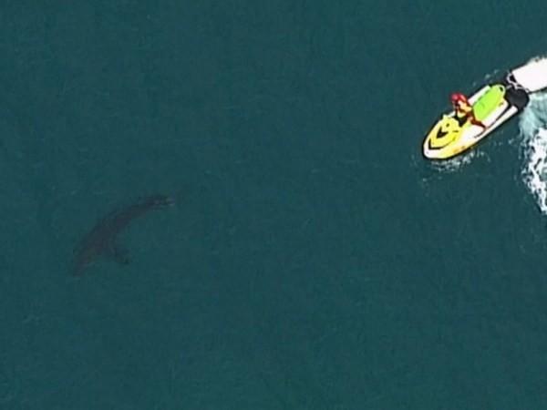 Cá mập trắng tấn công khiến tay lướt sóng người Úc thiệt mạng, ngày 7-6-2020