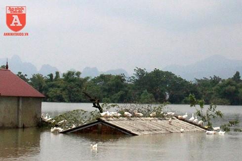 Nhiều ngôi nhà tại Chương Mỹ vẫn bị ngập sâu trong nước lũ