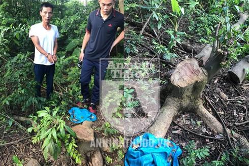 Ổ nhóm này còn gây ra vụ trộm cắp cây gỗ sưa tại Viện thuốc thuộc xã Ngũ Hiệp, huyện Thanh Trì, Hà Nội