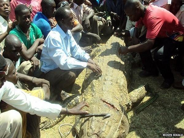 Xác con vật được kéo về làng