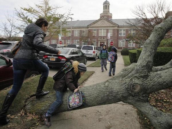 Chặt hàng nghìn cây xanh để đảm bảo an toàn cho người dân - bài học từ Mỹ và Anh ảnh 1