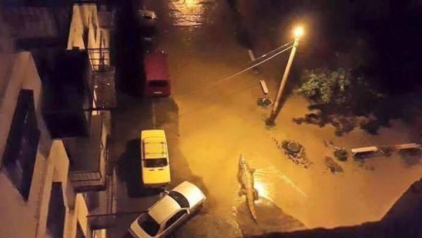Sau lũ lụt, hổ, báo, sư tử, cá sấu... tràn xuống đường phố ảnh 4