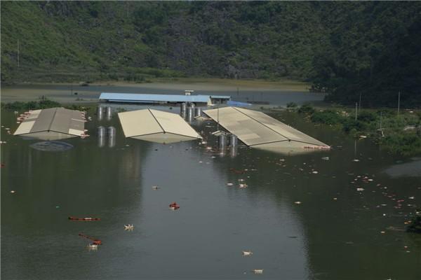 16.000 con lợn chết đuối trắng xóa vì lũ lụt ở Trung Quốc ảnh 2