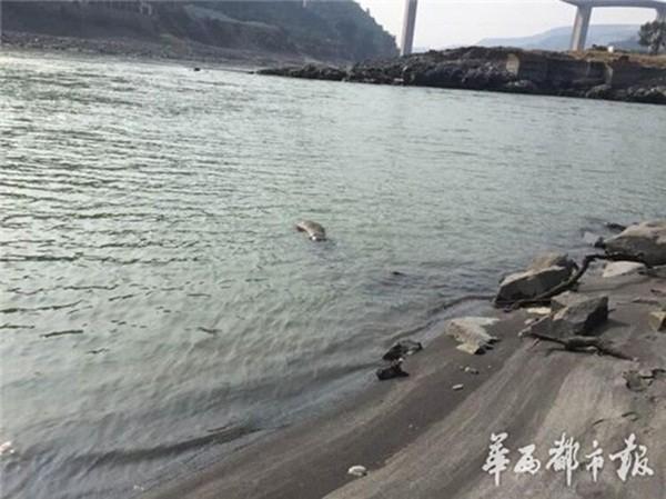 Xác anh Tiểu Bình bị buộc vào một tảng đá, ngâm trên dòng sông