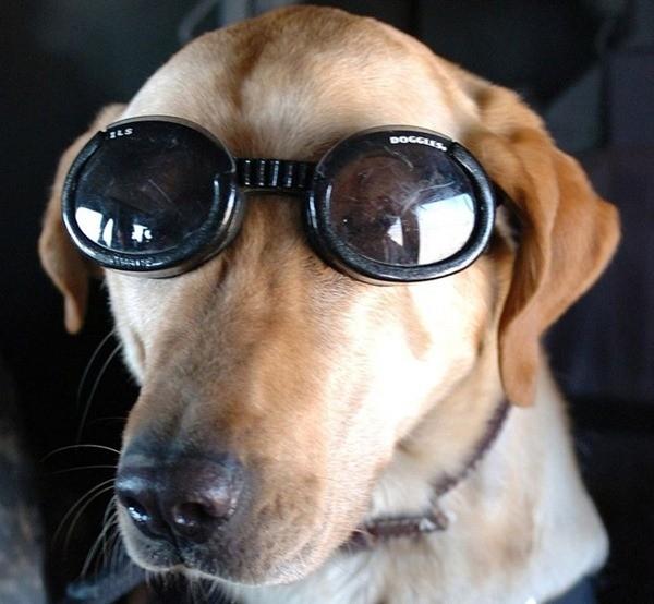 Điều ít biết về những chú chó nghiệp vụ Mỹ đi theo bảo vệ Tổng thống Mỹ ảnh 8