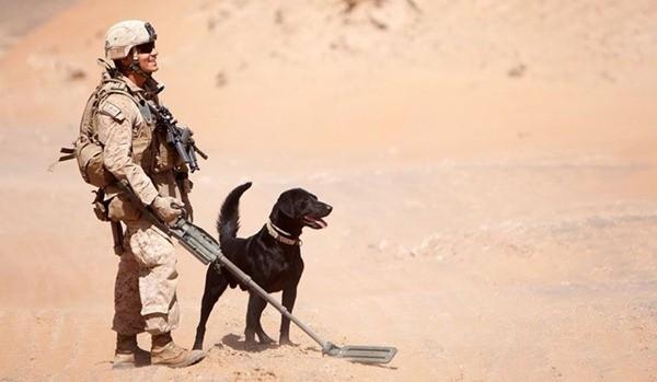 Điều ít biết về những chú chó nghiệp vụ Mỹ đi theo bảo vệ Tổng thống Mỹ ảnh 4