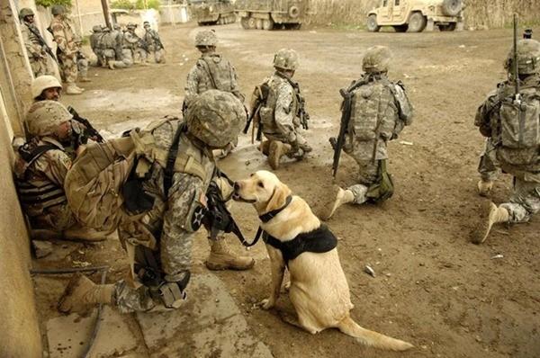 Điều ít biết về những chú chó nghiệp vụ Mỹ đi theo bảo vệ Tổng thống Mỹ ảnh 9
