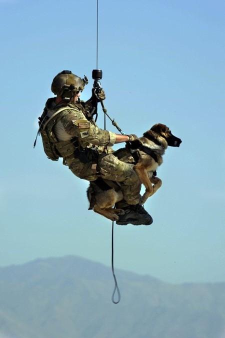 Điều ít biết về những chú chó nghiệp vụ Mỹ đi theo bảo vệ Tổng thống Mỹ ảnh 10