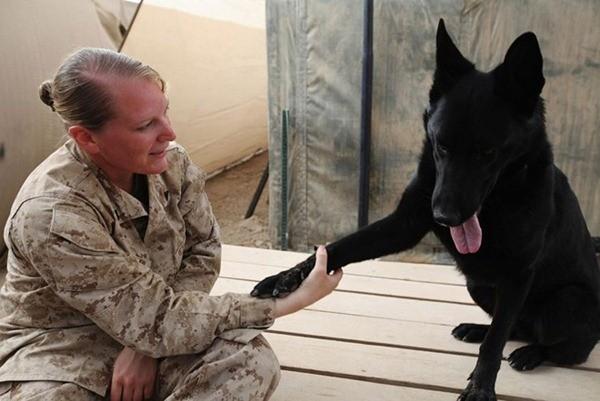 Điều ít biết về những chú chó nghiệp vụ Mỹ đi theo bảo vệ Tổng thống Mỹ ảnh 6