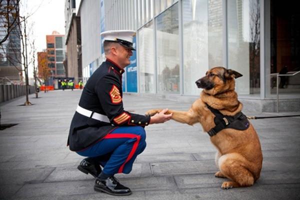 Chú chó Lucca được trao tặng huân chương và được viết thành sách. Lucca mất một chân trong trận chiến ở Afganistan năm 2012