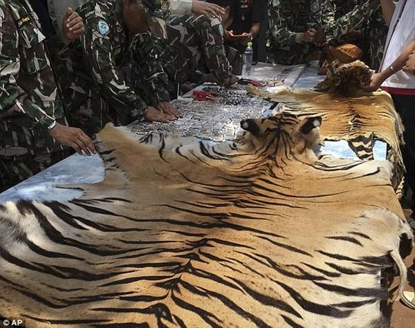 2 bộ da hổ toàn thân cùng 10 răng nanh đã được tìm thấy trong phòng ngủ của các nhà sư