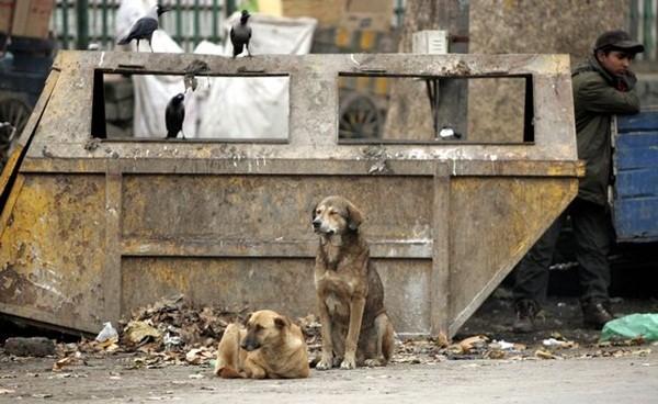 Có khoảng 250.000 con chó hoang trên toàn bang Kerala, chúng sống bằng việc ăn đồ thừa tại các bãi rác và thường xuyên tấn công người
