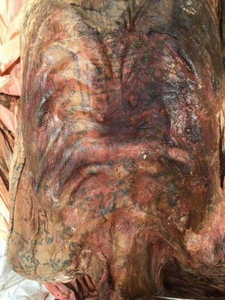 Dù phần thịt bên trong đã phân hủy hết nhưng bộ da vẫn còn nguyện vẹn