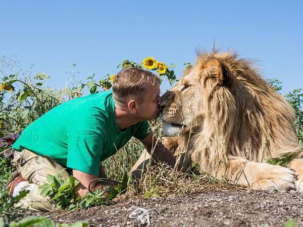 """Ngắm bộ ảnh """"siêu thực"""" về tình bạn đáng yêu của con người và sư tử ảnh 1"""