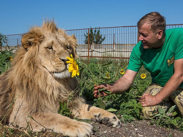 """Ngắm bộ ảnh """"siêu thực"""" về tình bạn đáng yêu của con người và sư tử ảnh 8"""