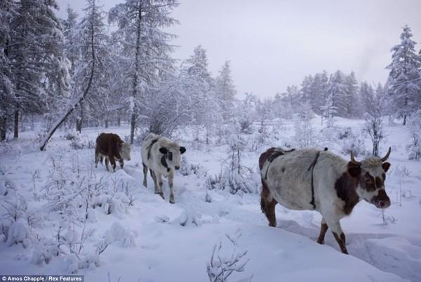 Ngôi làng lạnh nhất thế giới - nơi mất 3 ngày đế chôn cất người chết ảnh 3