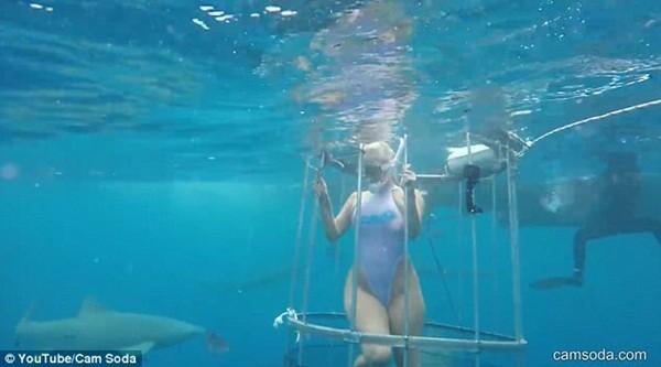 Ngôi sao khiêu dâm bị cá mập tấn công khi đang ghi hình dưới biển ảnh 3