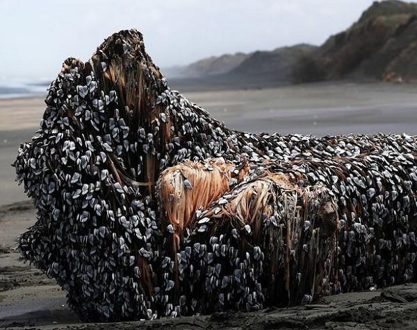 """Phát hiện """"tóc của quái vật biển"""" ở New Zealand?"""