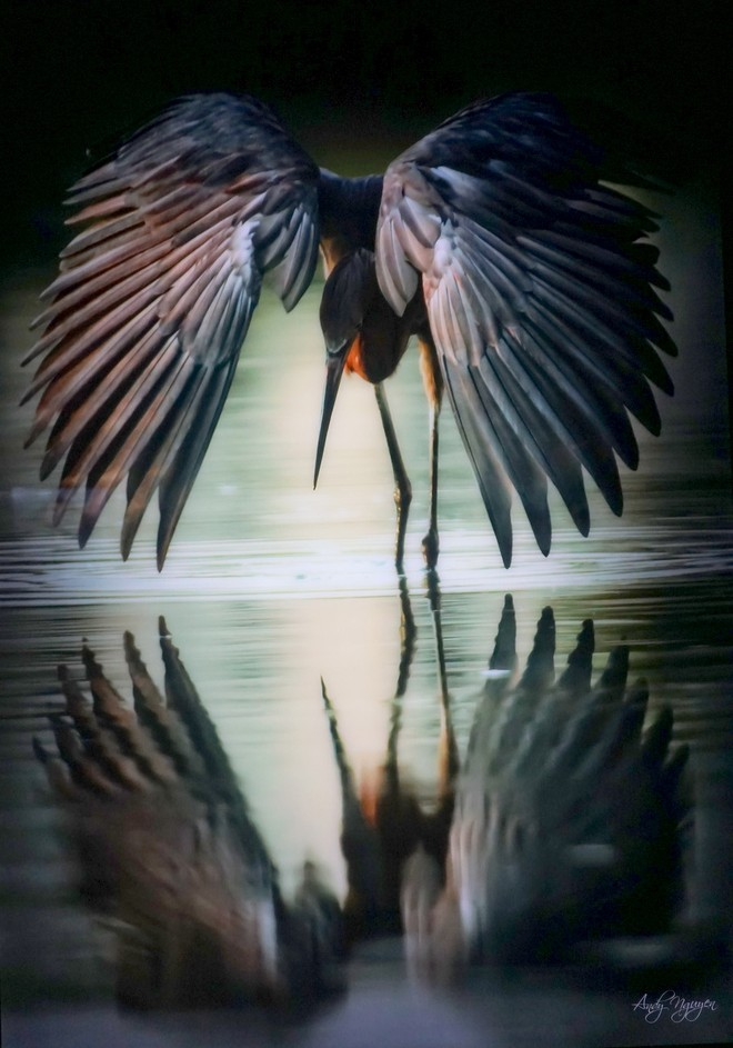 Đẹp mê hồn những tuyệt phẩm ảnh động vật hoang dã ảnh 7