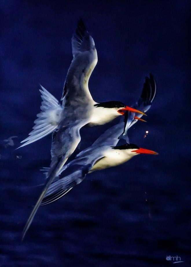Đẹp mê hồn những tuyệt phẩm ảnh động vật hoang dã ảnh 3