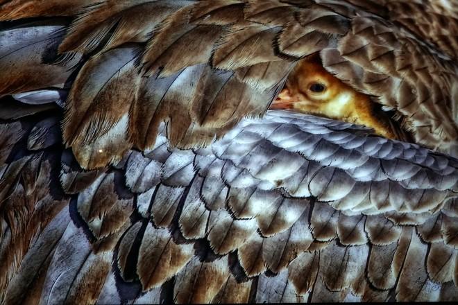 Đẹp mê hồn những tuyệt phẩm ảnh động vật hoang dã ảnh 4