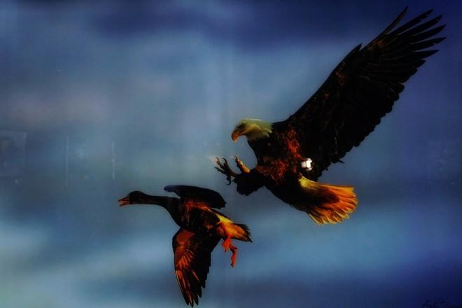 Đẹp mê hồn những tuyệt phẩm ảnh động vật hoang dã ảnh 10