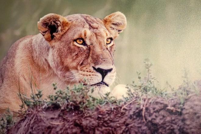 Đẹp mê hồn những tuyệt phẩm ảnh động vật hoang dã ảnh 11