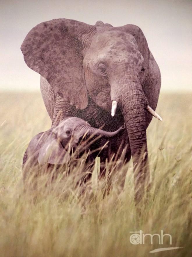 Đẹp mê hồn những tuyệt phẩm ảnh động vật hoang dã ảnh 9