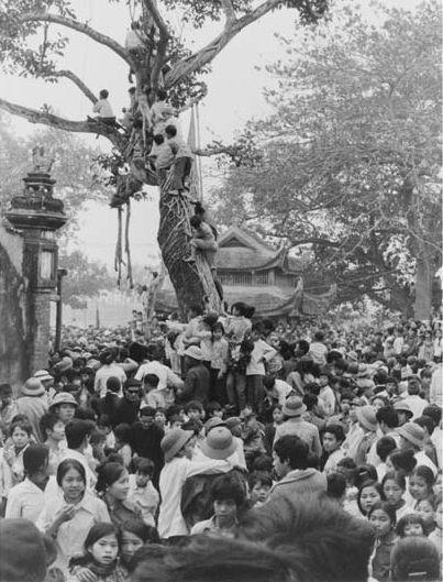 """Một bức ảnh trẻ em Hà Nội trèo lên cây xem hội được John Ramsden được công bố tại triển lãm """"Hà Nội - Mảnh đất hóa tâm hồn"""" năm 2013"""