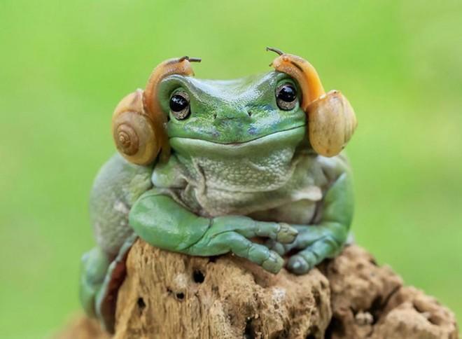 Công chúa ếch Leia trông như đeo headphone