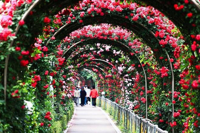 Sẽ có một không gian tràn ngập hoa hồng giữa lòng Hà Nội