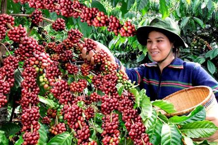 Buôn Ma Thuột được coi là Thủ phủ cà phê của Việt Nam