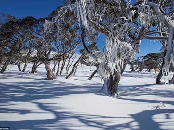 Australia: Thời tiết lạnh nhất trong 40 năm ảnh 1