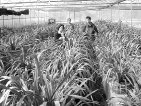 """Đầu tư vào nông nghiệp khá nhiều ưu đãi nhưng cũng không dễ """"xơi"""""""