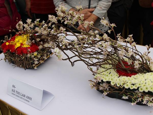 Ngắm hoa anh đào Nhật Bản trong tiết Xuân Hà Nội ảnh 2